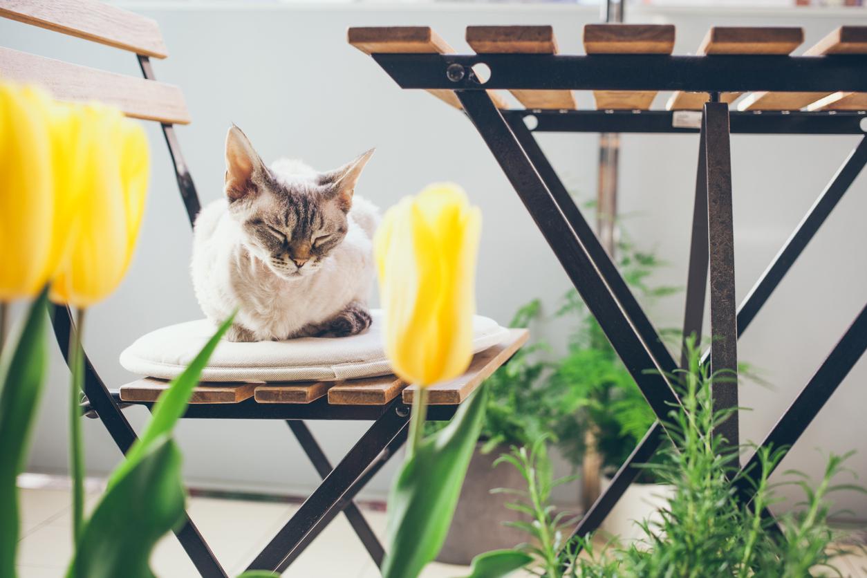 piante-balcone-terrazze